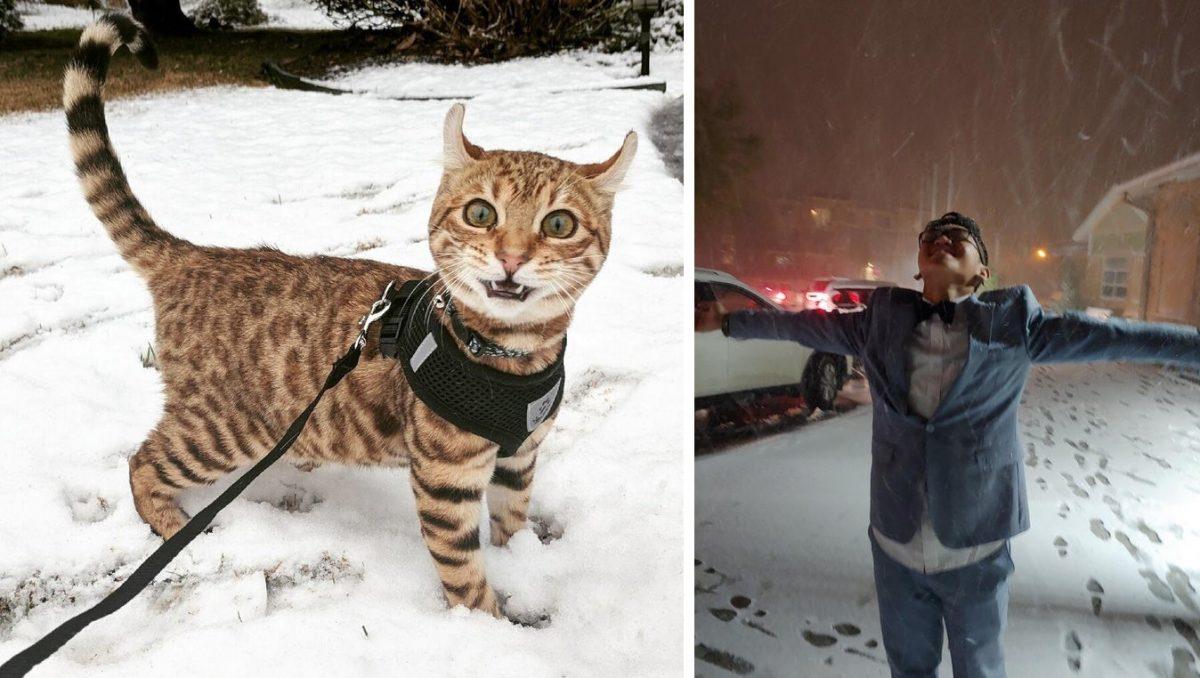 Милые и забавные фото реакций животных и людей на первый снег