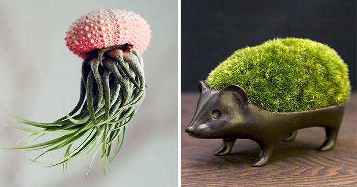 Чудесные горшки и кашпо для комнатных растений