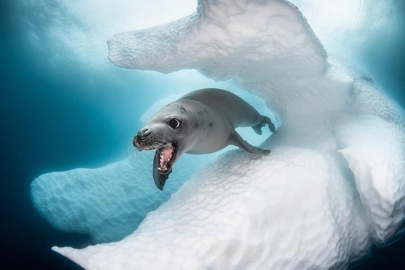 Невероятные подводные снимки с конкурса океанической фотографии