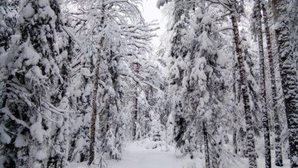 Уральская зимняя сказка