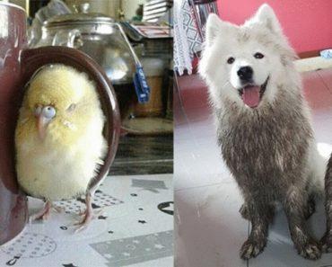 Милые и смешные животные, которые способны удивить любого хозяина