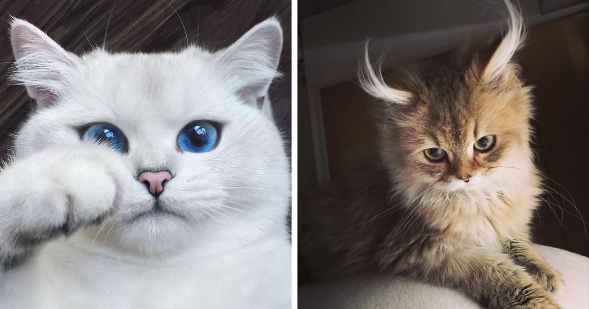 Лучшая десятка самых красивых кошек в мире