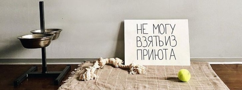 «Собаки — это не товар». Креативный фотопроект волонтеров из Москвы помогает людям обрести любящего друга