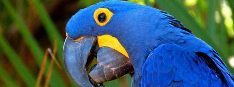 самые дружелюбные виды птиц